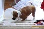 Hund geht die Treppe hoch