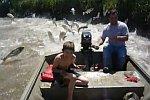 Bootsfahrt durch fliegende Fische