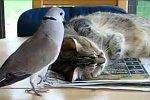 Taube nervt Katze beim Einschlafen