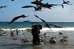 Ein Fischer und die Vögel
