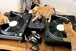 DJ-Katzen
