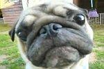 Hund guckt sehr vorwurfsvoll