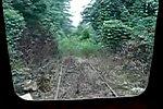 Zugfahrt durch einen Urwald