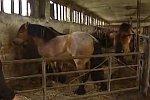 Aufgeregtes Pferd
