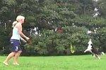 Hund spielt Volleyball