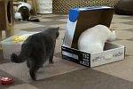 Katze sperrt Katze in eine Kiste