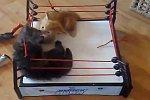 Cat-Wrestling