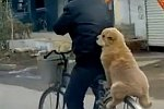 Hund sitzt auf einem Gepäckträger