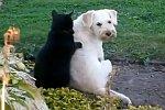 Katze massiert einen Hund