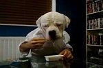 Hund isst einen Snack