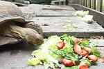 Schildkröte frisst im Zeitraffer