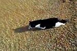 Katze geht Schwimmen
