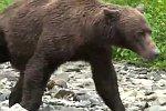 Ein Bär kommt sehr nah