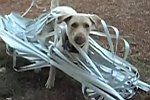 Hund kämpft mit einer Jalousie
