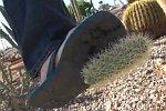 Kaktus im Bein