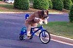 Hund fährt Fahrrad