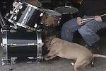 Hund spielt Schlagzeug mit seinem Herrchen