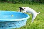 Hund holt seinen Ball aus dem Wasser
