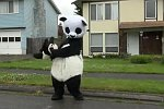 Tanzender Panda
