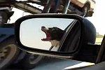 Hund schnappt nach dem Gegenverkehr