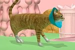 Sinnlose Katzenanimation