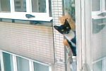 Katzen auf einem Balkon