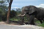 Elefant zerstört Poolparty