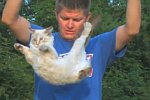 Darum landet eine Katze immer auf ihren Pfoten