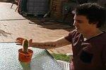 Kaktus mit der Hand abbrechen