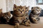 Kleine Kätzchen tanzen auf einem Bett