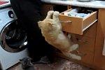 Katzen im Einsatz