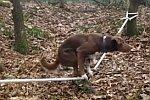 Hund balanciert auf einem Seil