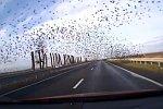 Fahrt durch einen Vogelschwarm