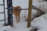 Hund steckt fest