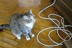 Katze mag kein DVD-Laufwerk
