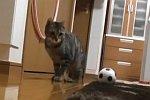 Torwart-Katze