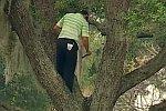 Baum-Golf
