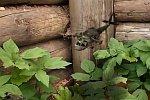 Militärische Verteidigung im Garten