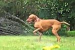 Hunde mit Rasensprengern - Compilation
