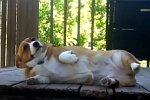 Hunde fühlen sich schuldig - Compilation