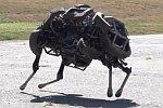 Roboter-Wildkatze