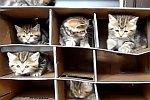 Kätzchen im Karton