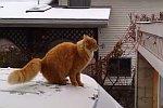Katze versucht auf ein Garagendach zu springen