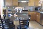 Ein Hund allein zu Hause