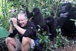 Angefasst von wilden Gorillas