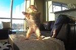 Hund versucht Bälle zu fangen