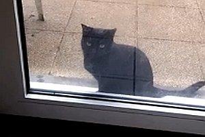 Katze will rein