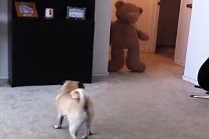 Hund hat Angst vor Teddybär