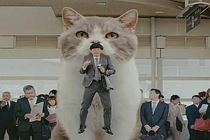 Japanische Riesenkatze