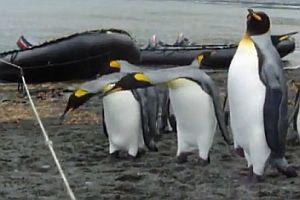 Pinguine und ein Seil